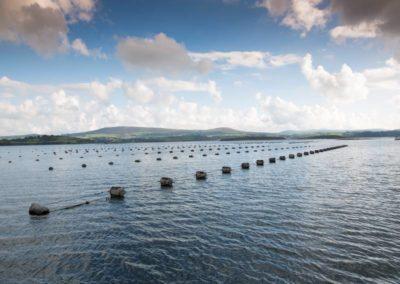 Bantry Mussels - pic BIM