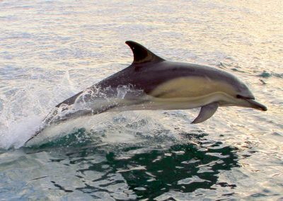 Dolphin Bantry Bay - pic Deirdre Fitzgerald